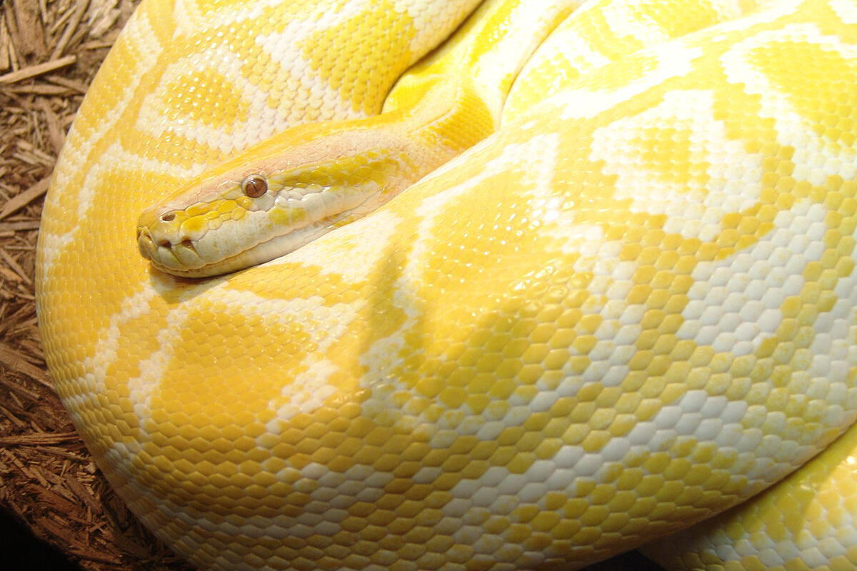5 things you did not know Python could do!